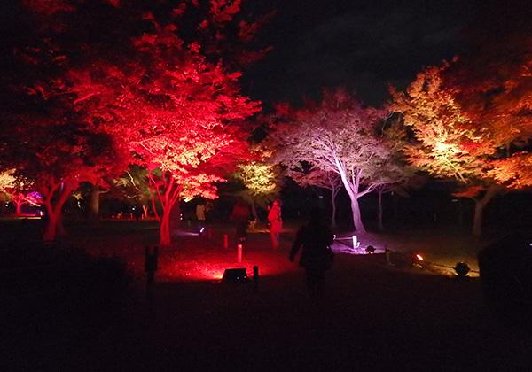 二条城 ライトアップ 庭園