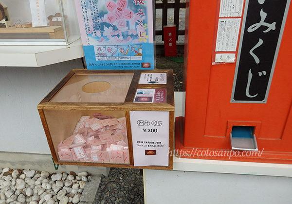 平野神社 おみくじ 桜