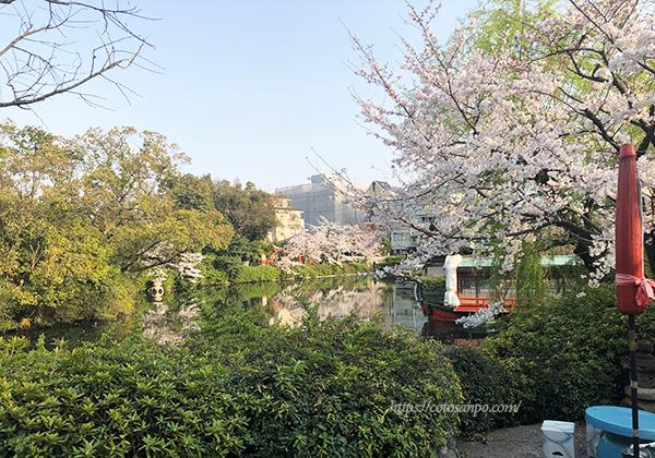 神泉苑 桜