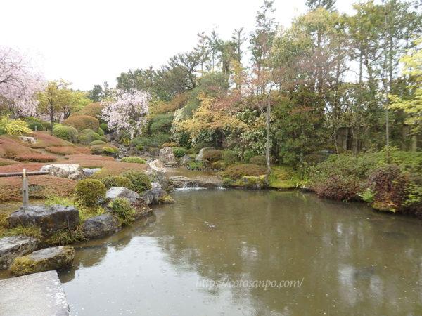 退蔵院 庭園