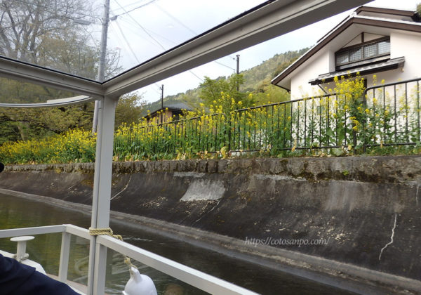 琵琶湖疏水船 菜の花