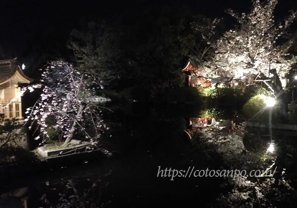 神泉苑 桜 ライトアップ