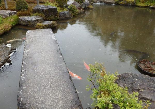 退蔵院 ひょうたん池