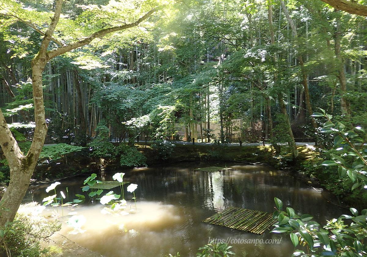 圓光寺 池