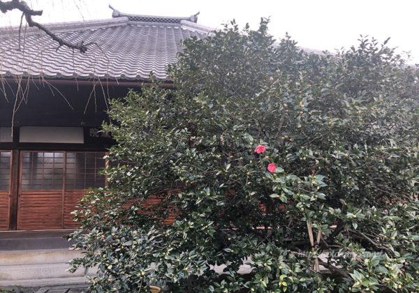 椿寺 本堂