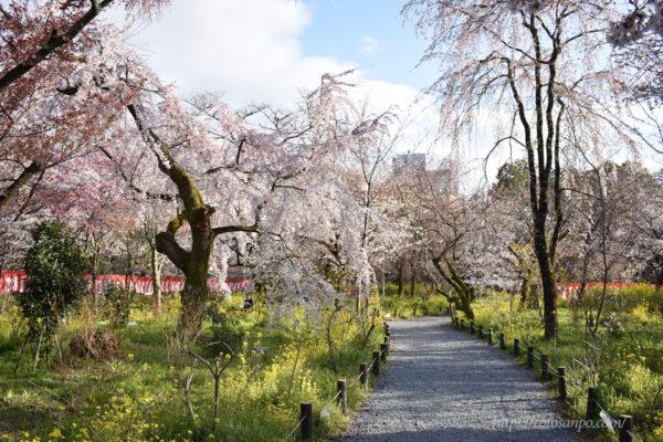 平野神社 さくら苑